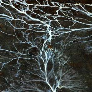 Tarmi's Mycelium inspiration for her Art Couture Garment Mycelium