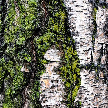 Tarmi's Moss and Silver Birch inspiration for her Art Couture Garment Mycelium